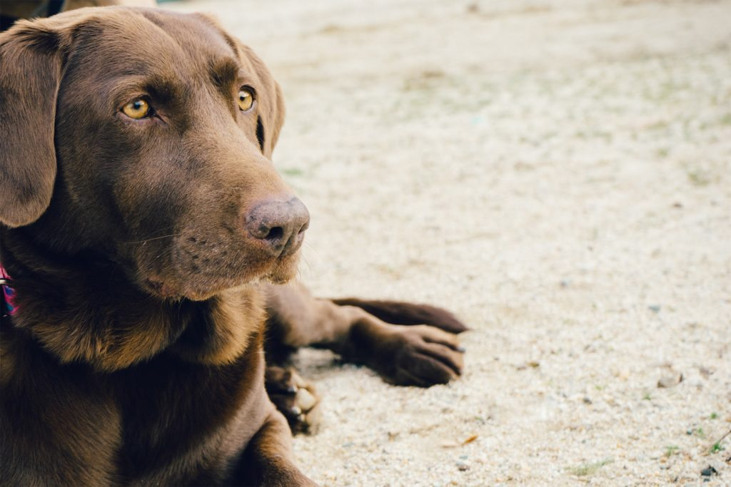 How to Become a Dog Foster Parent at Atlanta Humane Society