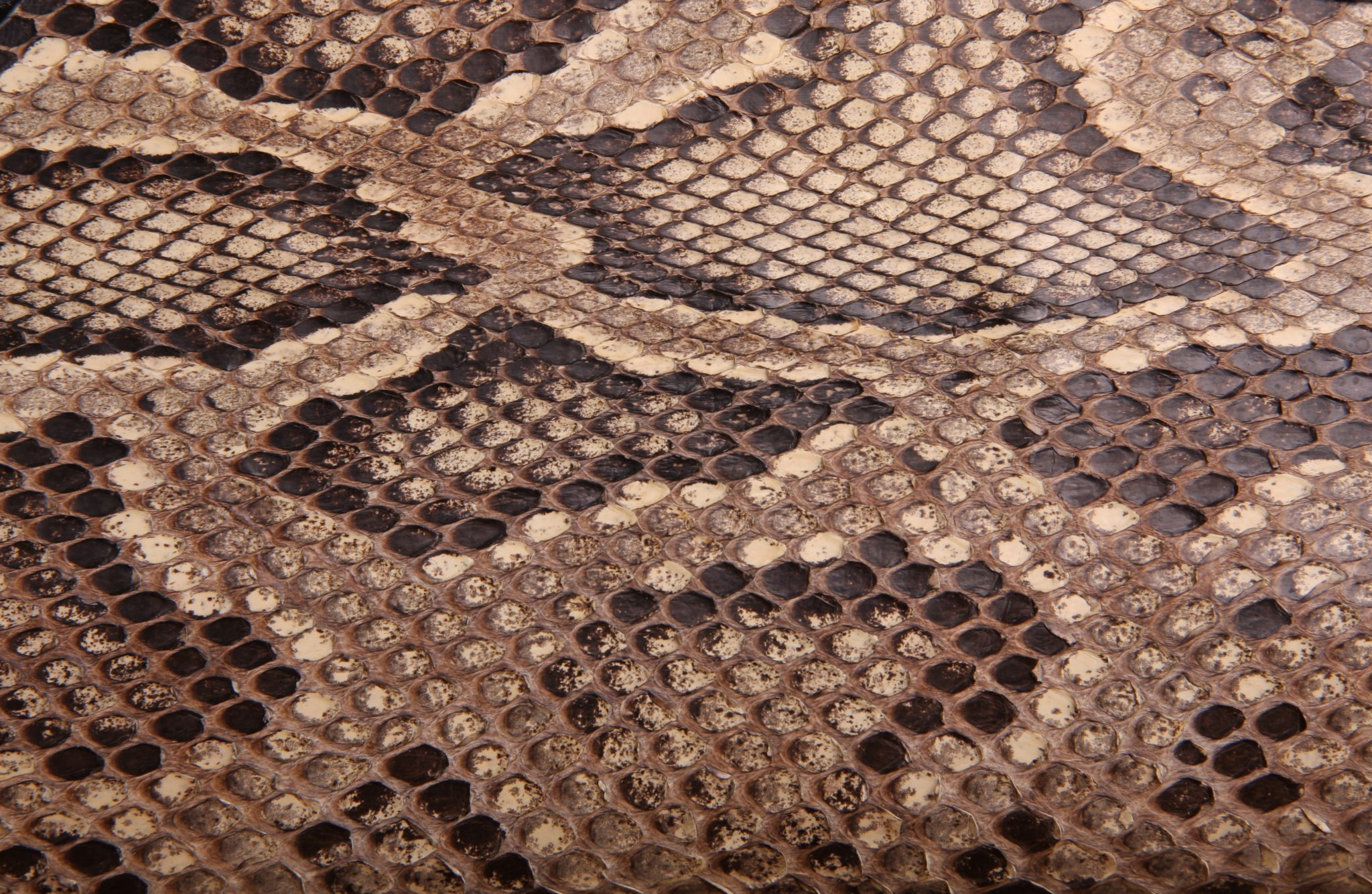3 Types Of Snakes You Can Have As Pets For Beginner Owners