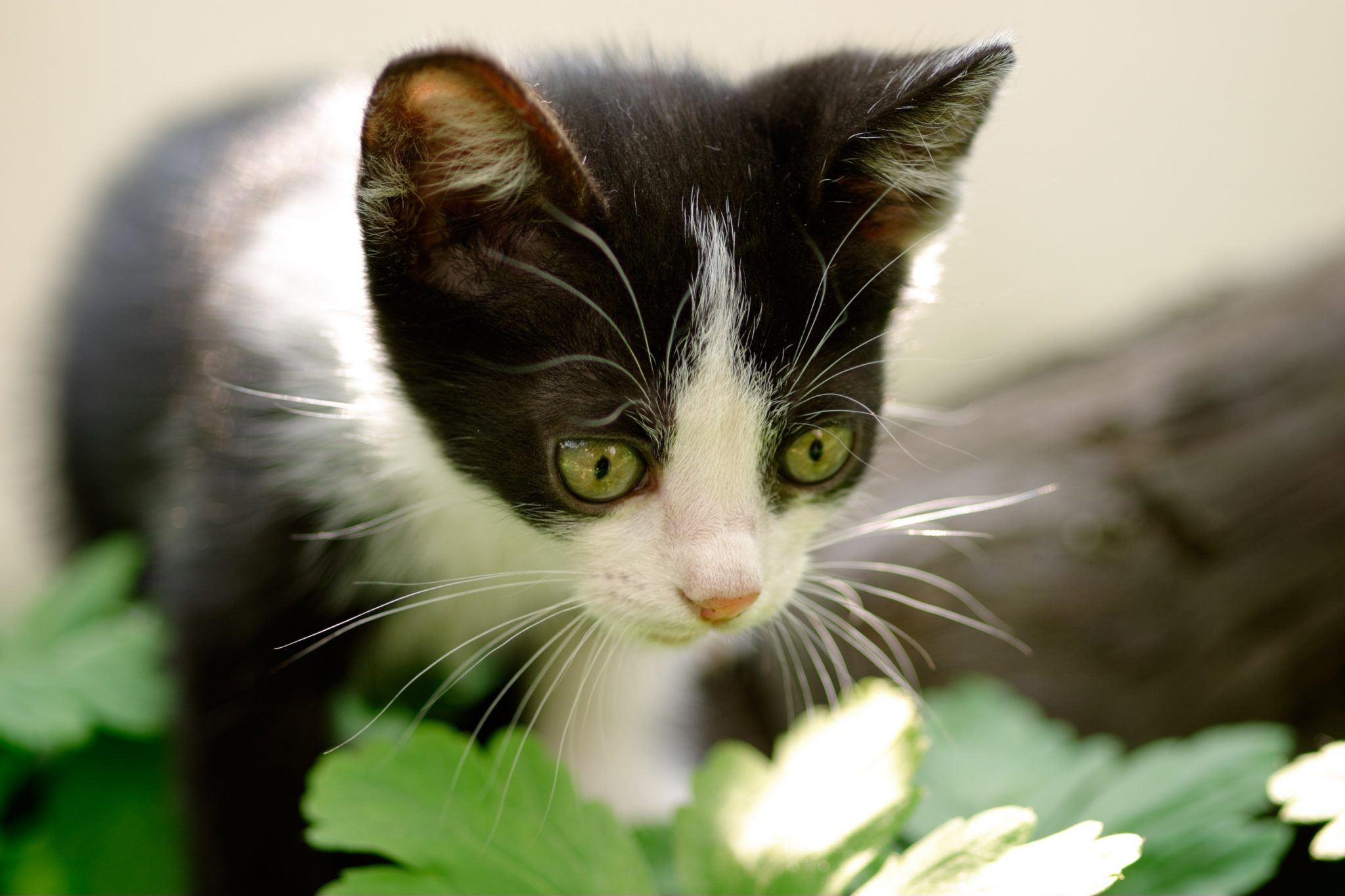 What To Do If You Find A Stray Cat Or Lost Kitten In