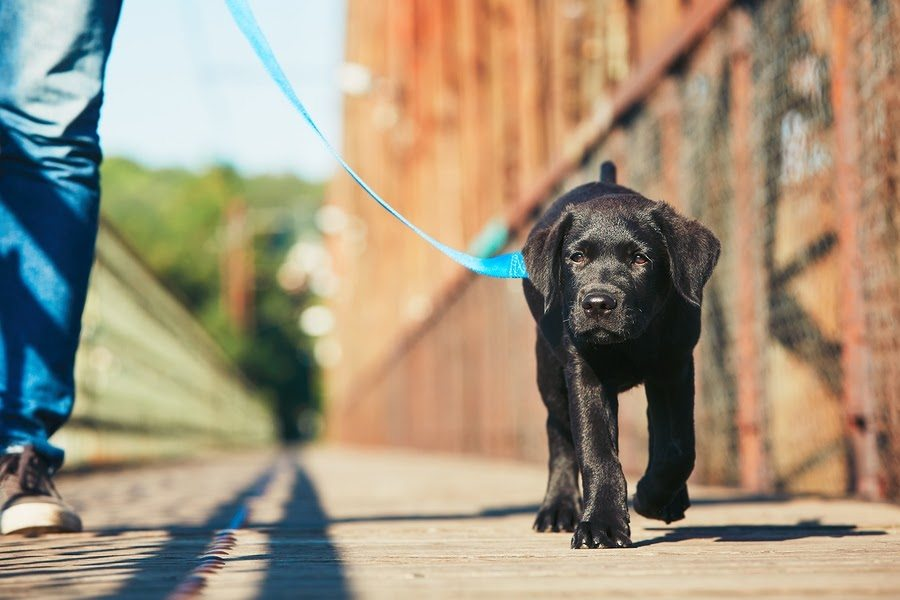 5 dog walking tips everyone should know
