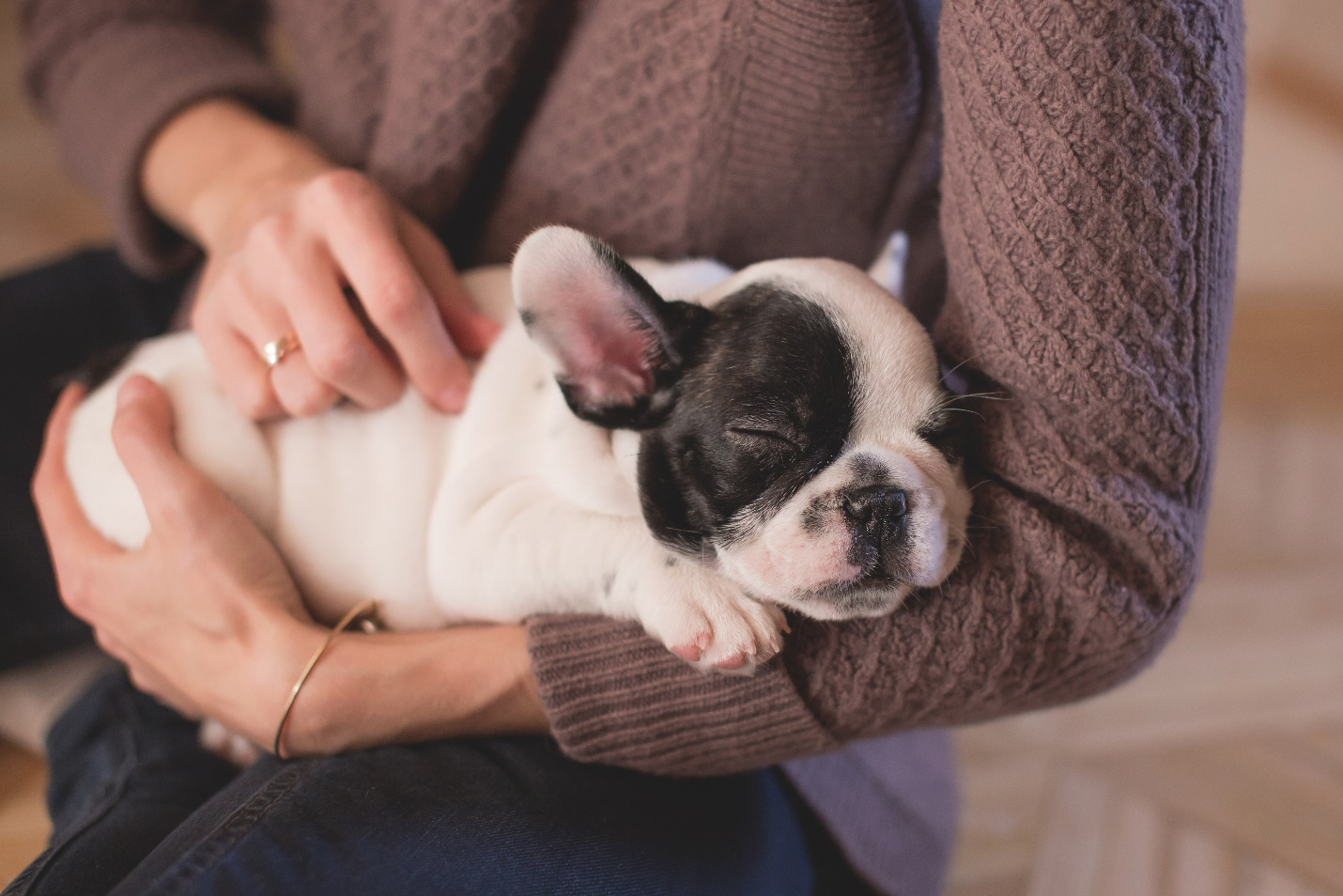 What is the Difference Between Pet Sitting and Boarding in GA?