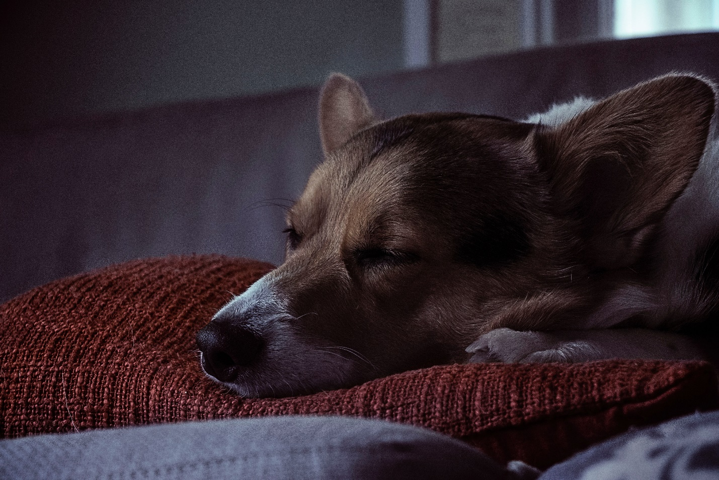 Is It Healthy For Dogs To Sleep All Day